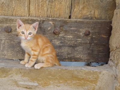 un gato en mi tejado...